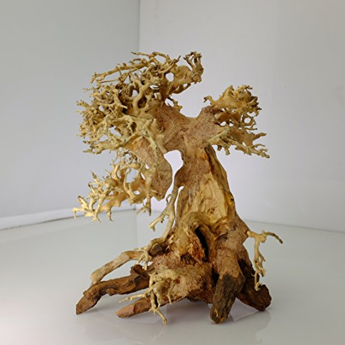 Review Bonsai Driftwood Aquarium Tree