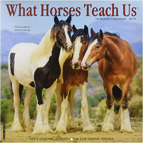 What Horses Teach Us 2019 Wall Calendar