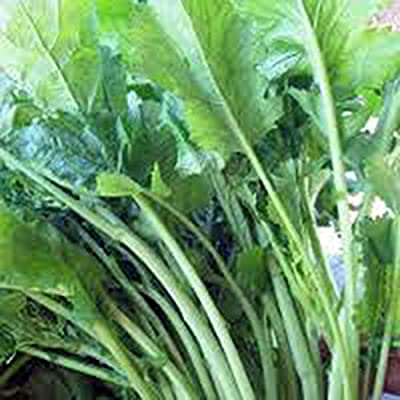 Broccoli Raab Seeds, Rapini, Heirloom, Organic, Non Gmo, 100 Seeds, Delicious a Culinary Delight : Garden & Outdoor