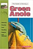 The Guide to Owning a Green Anole
