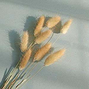 """50 Pcs Natural Dried Small Pampas Grass, Phragmites Communis, Foxtail Grass, Rabbit Dog Tail Grass, Dry Bouquet, Wedding Flower Bunch, 14""""-17"""" Tall Home Décor 4"""