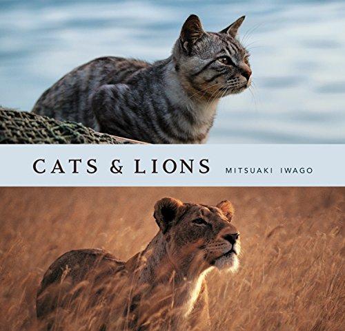 (Cats & Lions)