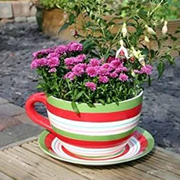 Large Cup And Saucer Ornamental Planter Red Green Stripe Amazon