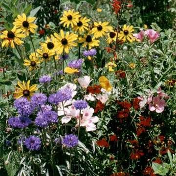 Outsidepride Birds & Butterfly Wild Flower Seed Mix - 5 LB by Outsidepride (Image #1)