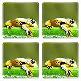 Luxlady Square Coasters Non-Slip Natural Rubber Desk Coasters IMAGE ID: 25377699 Exotic frog in indonesia Rhacophorus reinwardtii