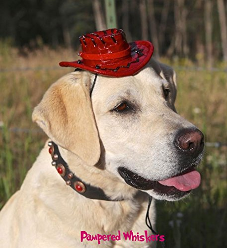 Pampered Whiskers Cowboy Hat for Large to Extra Large Dogs (Rodeo Red) by Pampered Whiskers