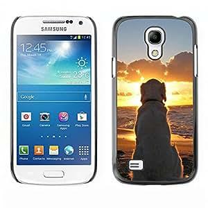 Qstar Arte & diseño plástico duro Fundas Cover Cubre Hard Case Cover para SAMSUNG Galaxy S4 mini VERSION! / i9190 / i9192 ( Labrador Golden Retriever Sunset Ocean Dog)