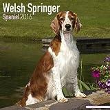 Welsh Springer Spaniel Calendar - Breed Specific Welsh Springer Spaniel Calendar - 2016 Wall calendars - Dog Calendars - Monthly Wall Calendar by Avonside
