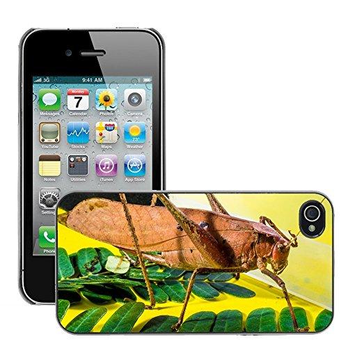 Bild Hart Handy Schwarz Schutz Case Cover Schale Etui // M00135564 Grasshopper Viridissima Insect Scare // Apple iPhone 4 4S 4G