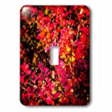 3dRose Alexis Photography - Seasons Autumn - Red berberis leaves in autumn. Play of light and shadow - Light Switch Covers - single toggle switch (lsp_267400_1)