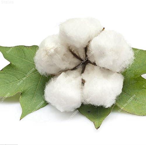 35pcs / bolsa rara semilla de algodón blanco que florece cultivos de plantas en maceta de Bonsai Jardín Gossypium Planta para la decoración del jardín envío gratuito: Amazon.es: Jardín
