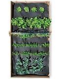 Vegetable SeedSheet, 4' x 8'