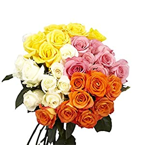 GlobalRose Assorted Roses- 50 Fresh Flowers – Delivery by Tuesday January 26 – Two Bright Colors