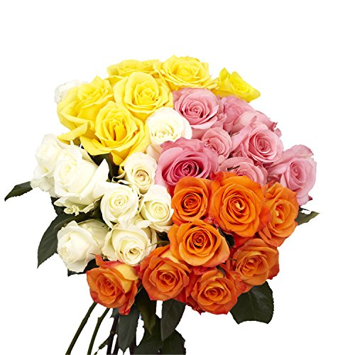 GlobalRose 50 Assorted Roses - Next Day Delivery- 2 Vibrant Colors (Roses Assorted 18)