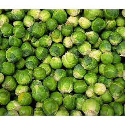 BRUSSEL SPROUTS LONG ISLAND Brassica Oleracea - 1, 000 Bulk Seeds : Garden & Outdoor