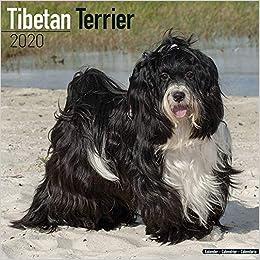 Tibetan Terrier Calendar