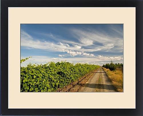 Framed Print of USA, Washington, Walla Walla. A road next to the vineyards of Walla Walla by Fine Art Storehouse