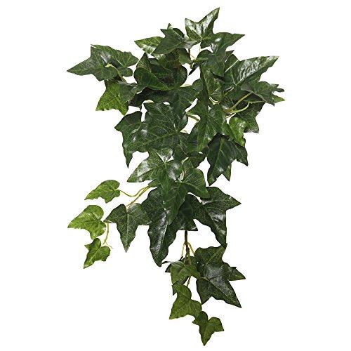 Ivy Bush - Vickerman FB170501 Hanging English Ivy