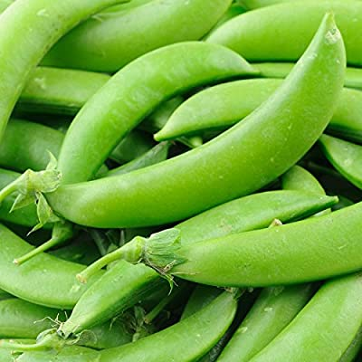 Sugar Lace II Snap Pea Garden Seeds (Treated) - Non-GMO, Heirloom Vegetable Gardening Seed