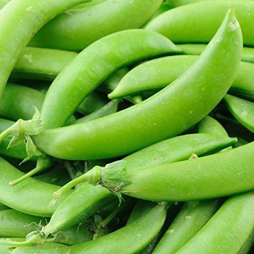 Sugar Lace II Snap Pea Garden Seeds (Treated) - 1 Lbs - Non-GMO, Heirloom Vegetable Gardening Seed