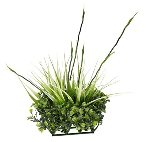 Fluval Chi Boj - Figura de y de altura Hierba Acuario Boj y Tall Grass. No tóxico, Acuario Suministros de Mascotas/Tiendas: Amazon.es: Productos para ...