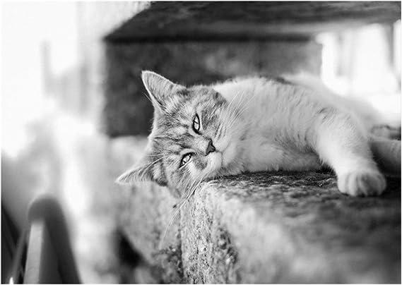 Puzzle Colección Gatos - Laid-Back Tom -300/500/1000 Pieza del ...