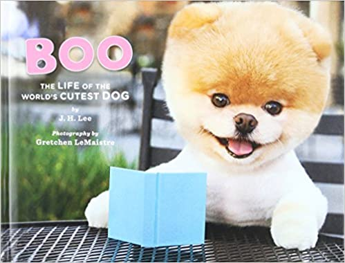 boo dog for sale