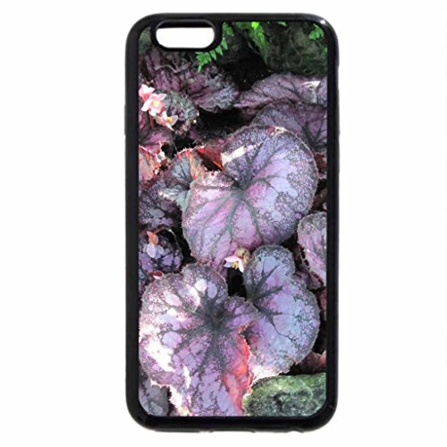 iPhone 6S / iPhone 6 Case (Black) Purple Plants at the garden