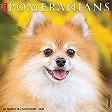 Just Pomeranians 2021 Wall Calendar (Dog Breed Calendar)