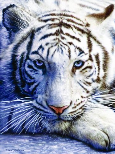 White Tiger Face 1000 pc Jigsaw Puzzle