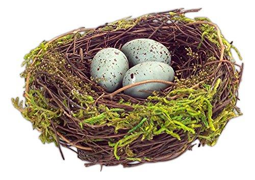 Birds Nest - 5