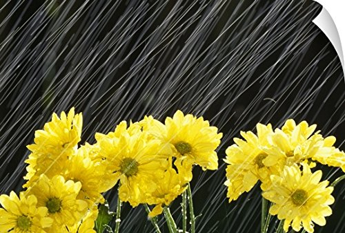 Canvas on Demand Craig Tuttle Wall Peel Wall Art Print entitled Raining On Yellow Daisies 48