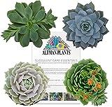 Altman Plants Flowering Succulent Collection, 4 Pack 2.5''