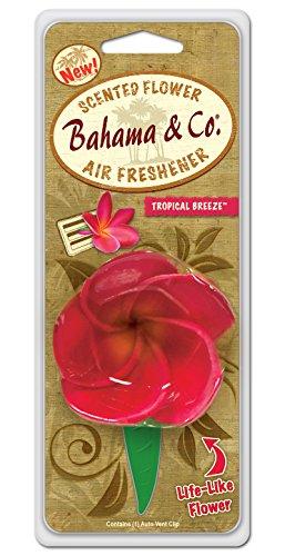 bahama-co-flower-tropical-breeze-06752