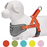 Blueberry Pet New 5 Colors Soft & Comfy 3M Reflective Strips Padded Dog Harness Vest, Chest Girth 20.5'' - 26'', Passion Orange, Medium, Nylon Adjustable Training Harnesses for Dogs
