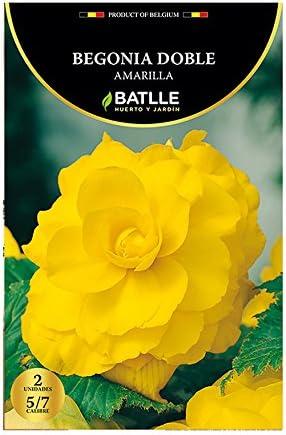Bulbos - Begonia Doble amarilla - Batlle: Amazon.es: Jardín