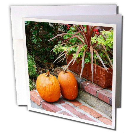 3dRose Susans Zoo Crew Photography - pumpkins brick steps planter - 1 Greeting Card with envelope ()