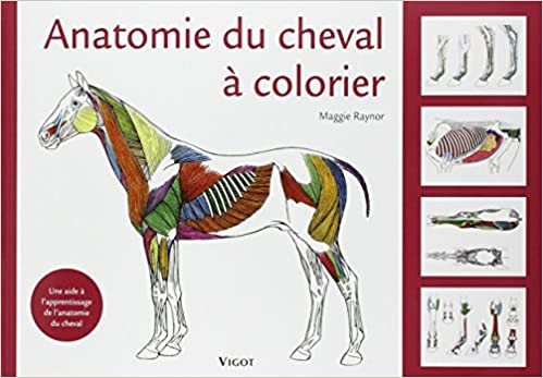 Coloriage De Cheval Deja Colorier.Amazon Fr Anatomie Du Cheval A Colorier Une Aide A L