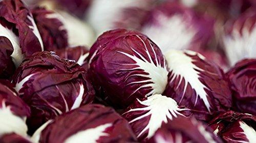 Verona Salad (Radicchio (Chicory) Seeds- Verona Red- 500+ Seeds by Ohio Heirloom Seeds)