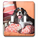 3dRose Danita Delimont - Dogs - Cavalier lying on pillows, MR - Light Switch Covers - double toggle switch (lsp_258241_2)