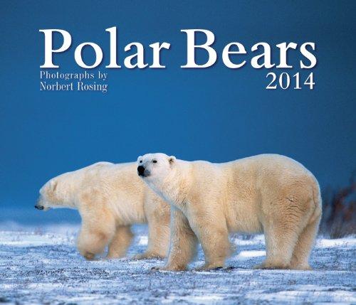 Polar Bears 2014