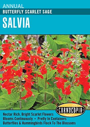 U0027Butterfly Scarlet Sageu0027 Salvia