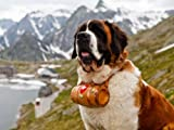 St. Bernard Dog Barrel Beautiful Landscape 24x18 Print Poster