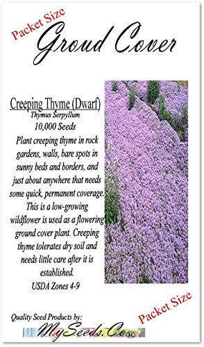Dwarf Creeping Thyme Herb Seeds - Thymus Serpyllum - Excellent Ground Cover - Non-GMO Seeds by MySeeds.Co (Dwarf Creeping (Packet Size)) (Seeds Ground Cover)