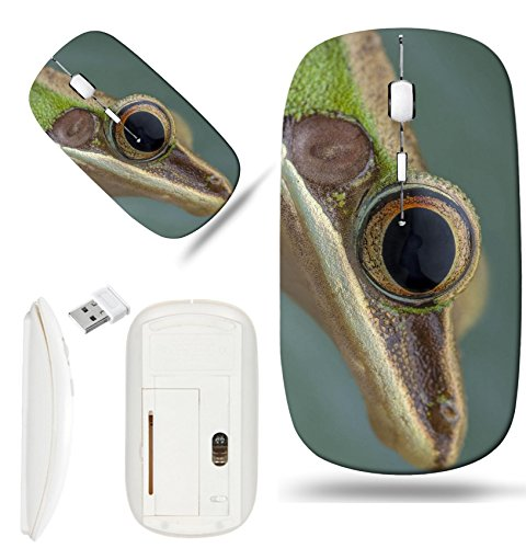 - Luxlady Wireless Mouse White Base Travel 2.4G Wireless Mice with USB Receiver, 1000 DPI for notebook, pc, laptop, computer, macdesign IMAGE ID 27569868 White lipped frog Hylarana labialis at the night