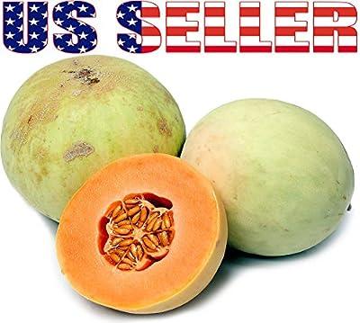 20+ ORGANICALLY GROWN Orange Flesh Honeydew Melon Seeds Heirloom NON-GMO Sweet