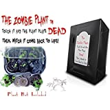 ZOMBIE PLANT GROW KIT- (Touch It and It PLAYS DEAD!) Unique Nature Kit- Grow a Fun Interactive House Plant that Plays DEAD when Touched & Comes back to life in Minutes! Amazing Year round Gift Idea!