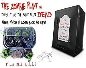 ZOMBIE PLANT GROW KIT- (Touch It and It PLAYS DEAD!) Unique Nature Kit- Grow a Fun Christmas House Plant that Plays DEAD when Touched & Comes back to life in Minutes! Unusual Gift!