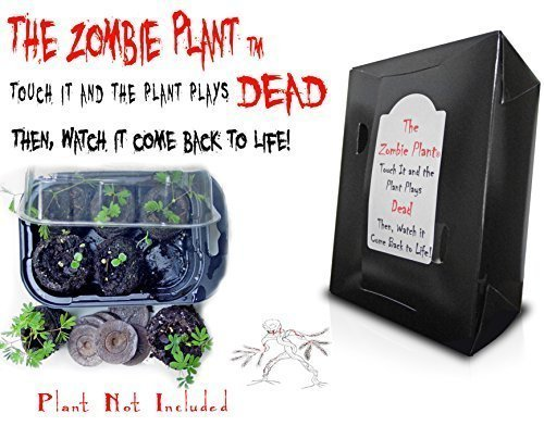 Halloween Gift Idea - ZOMBIE PLANT GROW KIT- (Touch It and It PLAYS DEAD!) Unique Nature Kit- Grow a Fun Interactive House Plant that Plays DEAD when Touched & Comes back to LIFE in minutes.