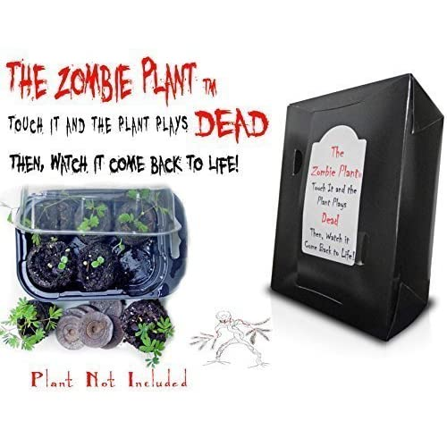 zombie plant grow kit touch it and it plays dead unique nature